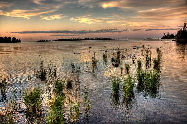 Flooded Grass